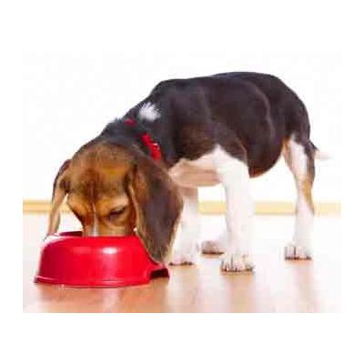 Dog Bowls & Food Dispensers Brisbane QLD - Dog Bowls & Food Dispensers Brisbane QLD, Gold Coast Suns