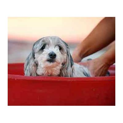 Dog Baths Perth WA - Dog Baths Perth WA, puppy, Puppies, Bondi Junction Sydney