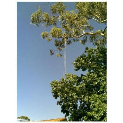 Difficult Trees Removed Lane Cove - Difficult Trees Removed Lane Cove