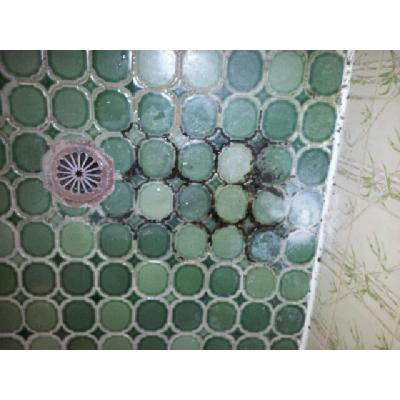 Green Shower - Before