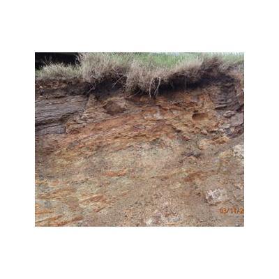 Soil Test Mount Pleasant