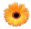 Kingswood Florist & Creative Balloons - Wedding Flowers Kingswood logo