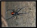 Challenge Pest Control Embleton logo