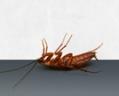 Frontline Pest Management Kippa-Ring | Pest Control North Brisbane logo
