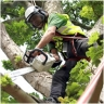 CTS Tree Felling & Stump Grinding Sydney logo