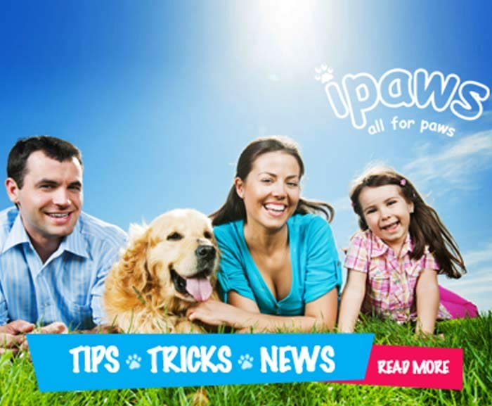 Pet Toys & Bedding Chatswood Northern Suburbs Sydney, Ryde, Epping